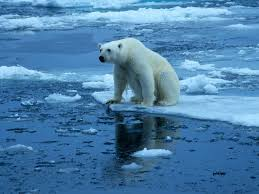 effects & causes of climate change